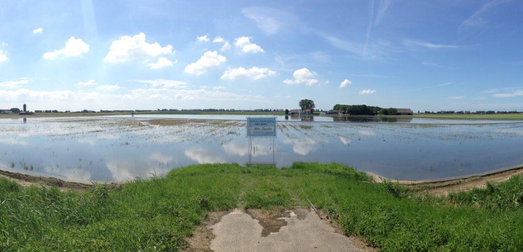 De polder onder water op Flakkee in de strijd tegen aaltjes.